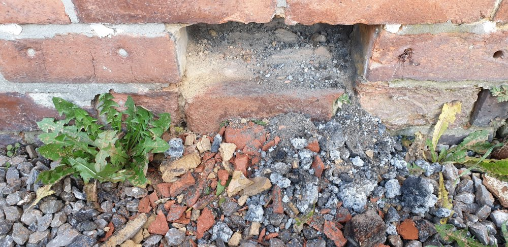 Brick removed to show damp course or lack of it.jpg
